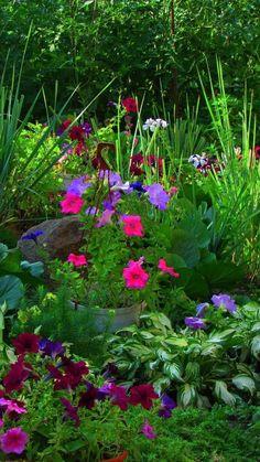 petunia, rudbeckia, flower, flower garden, greenery, beautiful