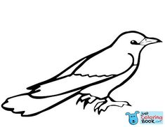 Best Printable Common Cuckoo Bird Coloring Pages and others free printable coloring pages for kids and adults! Just free for you! Bird Coloring Pages, Free Printable Coloring Pages, Coloring Pages For Kids, Coloring Sheets, Coloring Books, Owl Facts, Cute Birds, Animals Of The World, Wild Birds