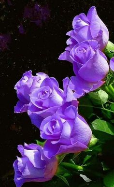 E::Purple Flowers