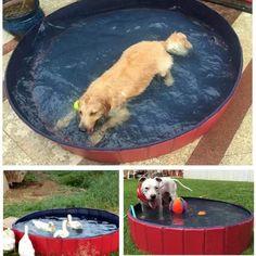 ▷ 🐷 El CERDO el otro mejor amigo del hombre ✔️ Dogs, Baby Pigs, Dog Pools, Portable Swimming Pools, Miniature Pigs, Big Dogs, Pet Dogs, Dog, Doggies