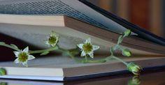 Los libros que hablan de libros como protagonistas de sus tramas  - http://kcy.me/25soq vía @ZoomNews_ES