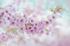 Spring in Pink by Jacky Parker on 500px