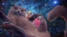 <3 Fat Cats in Space <3