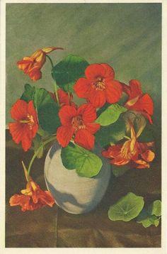 Gustaf Olof (Olle) Hjortzberg (1872-1959) —  Nasturtiums  Indian Cress in Chinese Jar,  1943 (461×700)