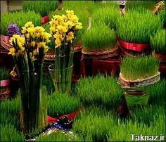 Spring is new year in IRAN