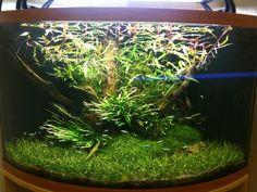 How to scape a corner aquarium? Tropical Freshwater Fish, Freshwater Aquarium, Tropical Fish, Planted Aquarium, Aquarium Fish, Aquarium Aquascape, Corner Aquarium, Aquarium Accessories, Fish Breeding