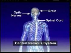 What Is MS? : National Multiple Sclerosis Society