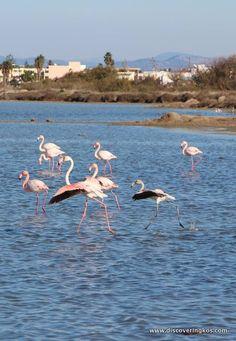 Kos, Greece, Island, Animals, Greece Country, Animales, Animaux, Islands, Animal Memes