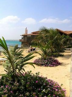 Santa Maria, Sal, Cape Verde #beaches #capeverde #travel