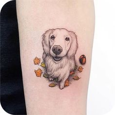 tattoodo on Picoji Dog Portrait Tattoo, Istanbul Turkey, Dog Portraits, View Photos, Tattoo Designs, Ink, Tattoos, Videos, Dogs