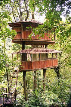 Fancy 2 story Tree house