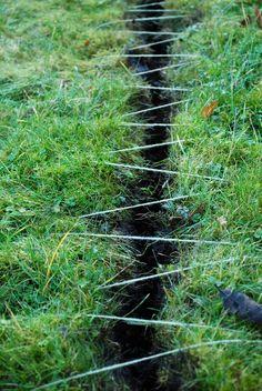 Hannah Streefkerk - Grass restorations