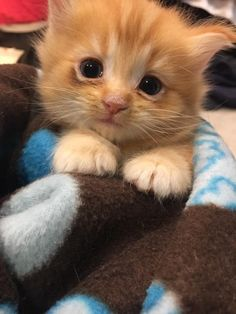 A tiny kitten and his cat momma are so happy to have a roof over their heads again after they lost the only home they ever knew. Meet Butterscotch!         Purrfect Pals Cat ShelterThis four-week old kitten and his cat mama, Goldie, came to Purrfect Pals, a rescue in Arlington, Washington, after the...