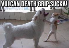 funny animal pictures cat fighting dog