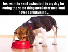 Just want to give a shoutout to my dog for eating the same thing meal after meal and never complaining...