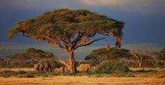 Die schönsten Nationalparka in Afrika | Safari | Big Five | Tiere | Afrika Reise | Afrika Urlaub African Elephant Facts, Savanna Grassland, Bali, Destinations, Safari, Fun Facts, Country Roads, Google, African Elephant