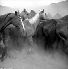 Beautiful: The moody images show horses on the dusty cattle ranches