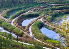 "Turenscape transforms ""lifeless ditch"" into wetland park with meandering causeways."