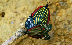exotic butterfly pics | Unique Wallpaper: Exotic Butterfly #Butterflies