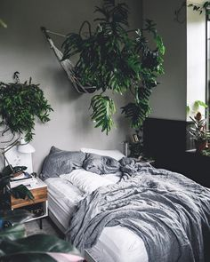 Epic 98+ Easy Houseplants For Indoor Plants https://decoratoo.com/2017/07/23/98-easy-houseplants-indoor-plants/ Below you can observe both of these plants one year later. The plants are usually easy to take care of, making them a great option for even the least-experienced gardener.