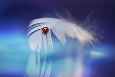 #drops #water #dew #harmony #peace #nature #soul #bubbles
