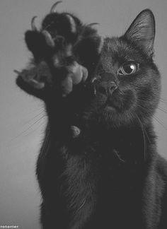 Mooie zwarte kat :-) Ik had vroeger twee van zulke prachtexemplaren, Beautiful black cat :-) I used to have two such fine specimens ❤️