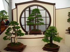 Bonsai trees at Hampton Court Flower Show.