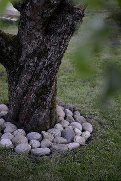 sten runt träd - Sök på Google