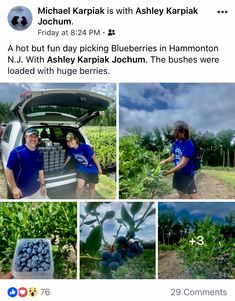More happy DiMeo Farm customers picking blueberries in South Jersey