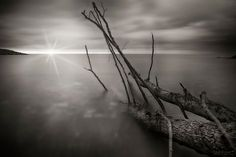 tree stranded on the beach by dlddanilo
