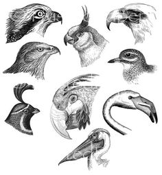 Twisted Papers Vintage Digital Victorian Nature Illustrations, Bird Heads, Birds, Collage Sheet