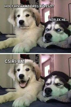 Dog Puns - Funny Dog Quotes - Dog Puns The post Dog Puns appeared first on Gag Dad. Dog Quotes Funny, Funny Puns, Funny Animal Memes, Cute Funny Animals, Funny Animal Pictures, Funny Photos, Fun Funny, Animal Puns, Bizarre Pictures