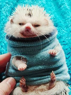 Man this hedgie looks pissed!