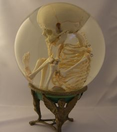 """This specimen shows a skeleton in its natural position as in the womb. Inside of this 9"""" glass sphere is a hand cast fetal skeleton that has been fully articulated and positioned in the """"fetal"""" position."""