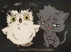 kuroo, bokuto, cat, owl, gif, http://girlwiththewhiterabbit.tumblr.com/post/139722910730/ive-been-whipped-into-shape-by-some-ruffians