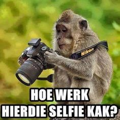 How does this selfie shit work? - Enjoy the Shit South Africans Say! Blurry Pictures, Very Funny Pictures, Taking Pictures, Mzansi Memes, African Memes, Nikon, Amazing Animals, Afrikaanse Quotes, Struggle Is Real
