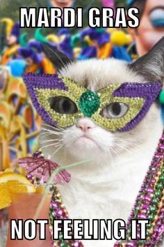 Mardi Gras grumpy cat