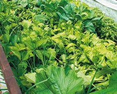 zelenině se na vysokém záhoně daří Raised Beds, Herbs, Gardening, Composters, Garten, Herb, Lawn And Garden, Garden, Elevated Garden Beds