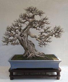 ᴥ♦A little #bonsai inspiration for the day!♣֍ #BonsaiInspiration