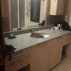 Quando ele resolve dar uma relaxada no seu próprio spa particular. | 30 imagens reais demais para todo mundo que vive com um gato