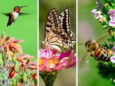 Birds, Bees, Butterflies and Blossoms Wednesday, April 17 from 2:00 to 4:00 P.M.  Join UW-Extension Horticulturist Chirssy Wen and learn to design your garden to attract the beautiful and beneficial B's: birds, bees and butterflies. Sponsored by the Friends of APL, the program is open to the public, free of charge, and snacks will be provided.  Hope to see you there!