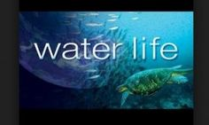 L'importance de l'eau sur Terre Water Life, Documentaries, Earth, Water