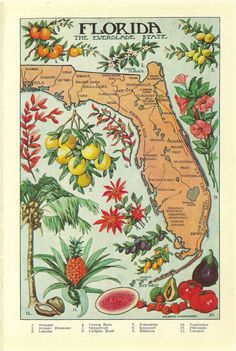 1912 vintage FLORIDA illustrated map  - love the colors here