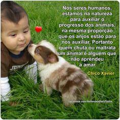 Mensagem de Chico Xavier (Animais) Clique na imagem e encontre esta e muitas outras reflexões, mensagens...