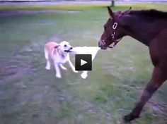 Baby Horse and Dog Playing