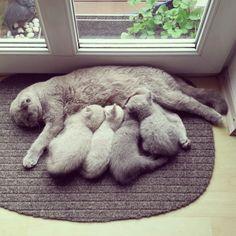Lizz mit ihrem Quartett