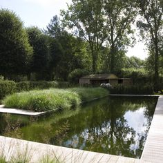 tuinteam pool in the woods