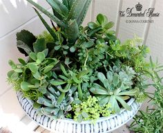 The Decorated House ~ Succulents in a Faux Cement Finished Urn. How to create a Faux Cement Finish
