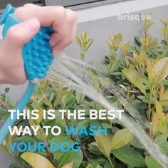 Animals And Pets, Funny Animals, Cute Animals, Beagle, I Love Dogs, Puppy Love, Your Dog, Useful Life Hacks, Dog Life