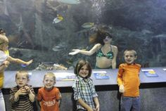 Mermaids on tour - Life - Central Kentucky News